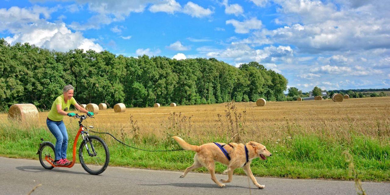 Dogscooter-Zughundesport-APORT-03-zugeschnitten