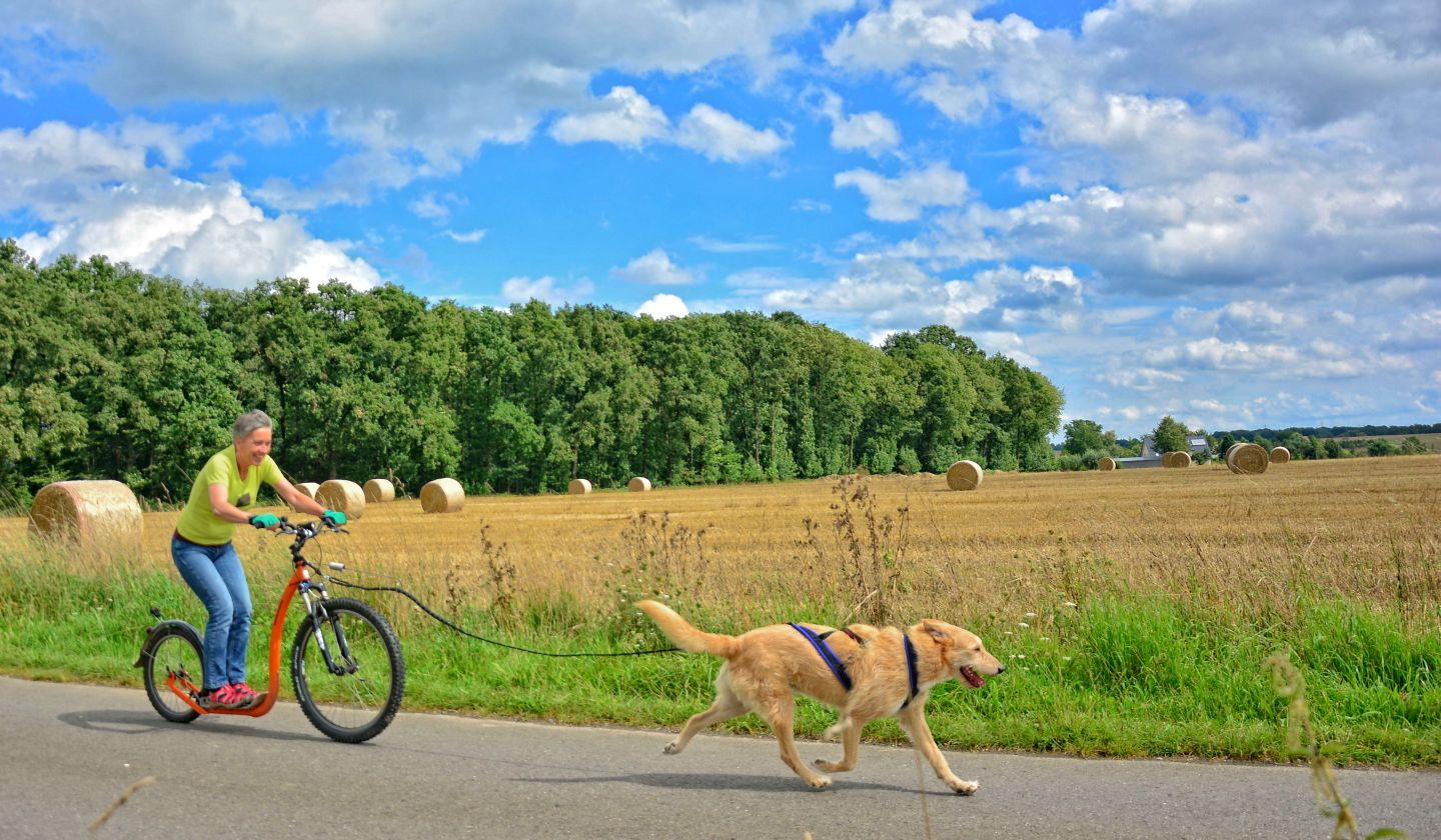 Dogscooter-Zughundesport-APORT-03