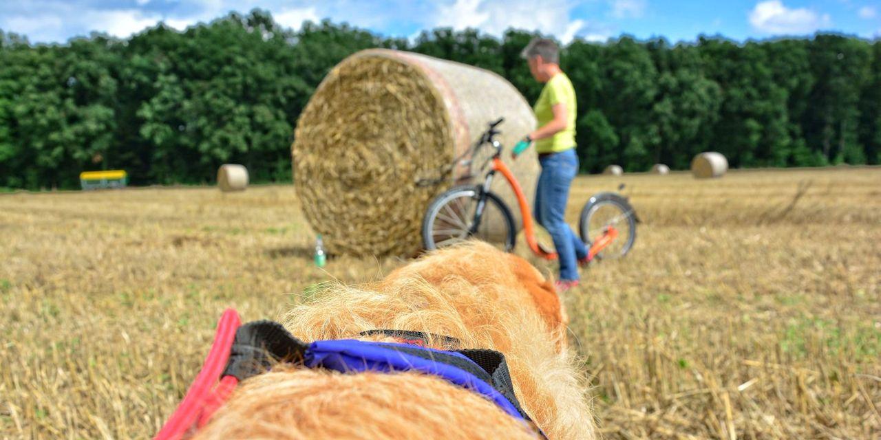 Dogscooter-Zughundesport-APORT-07-zugeschnitten