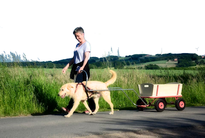 Bollerwagen beim Zughundesport bei APORT