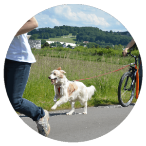 Dogscooter-Zughundesport-APORT-137a