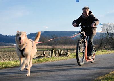 Mit dem Dogscoote beim Zughundesport bei APORT