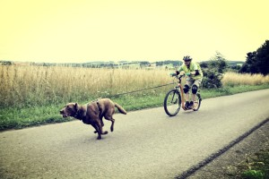 Dogscooter-Zughundesport-APORT-23