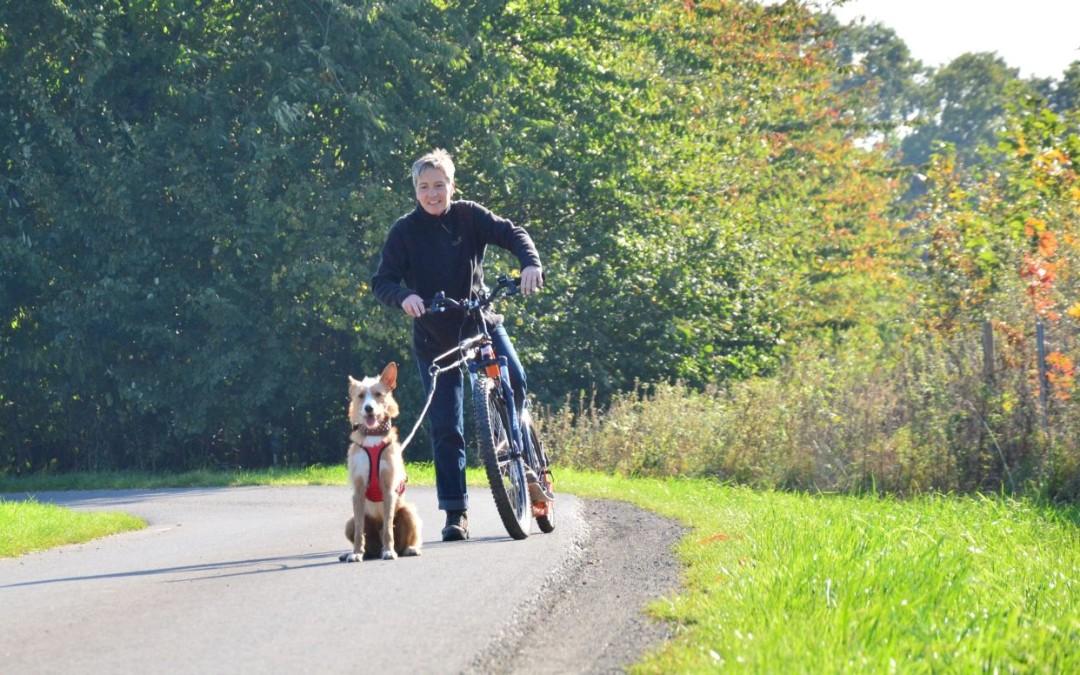 Dogscootern – Welcher Hund eignet sich