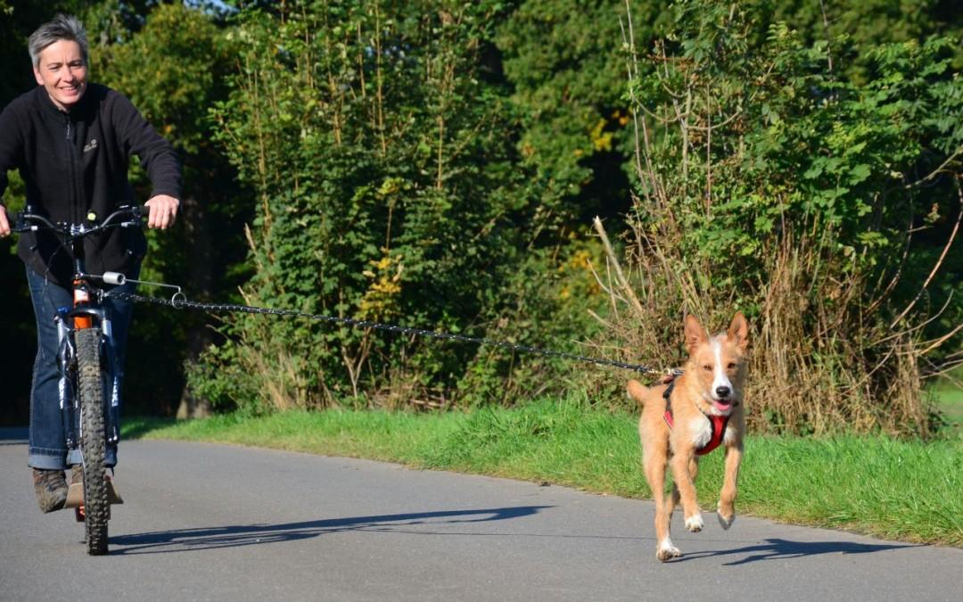 Zughundefibel für Beginner