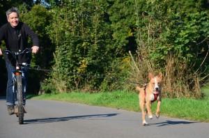 Dogscootern und die ersten Zugversuche mit Moos, der hier ca. 11 Monate alt ist.