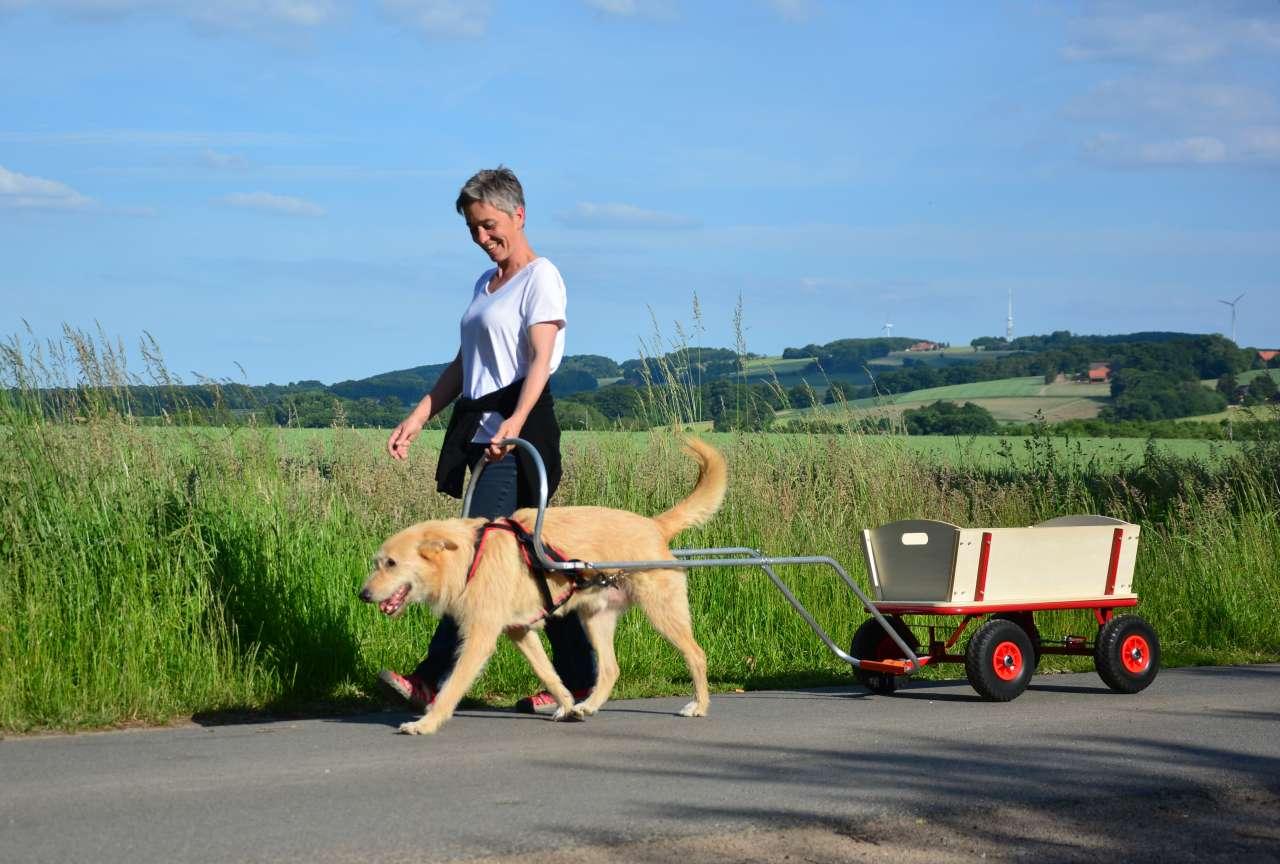 Verkauf Bollerwagen Hund