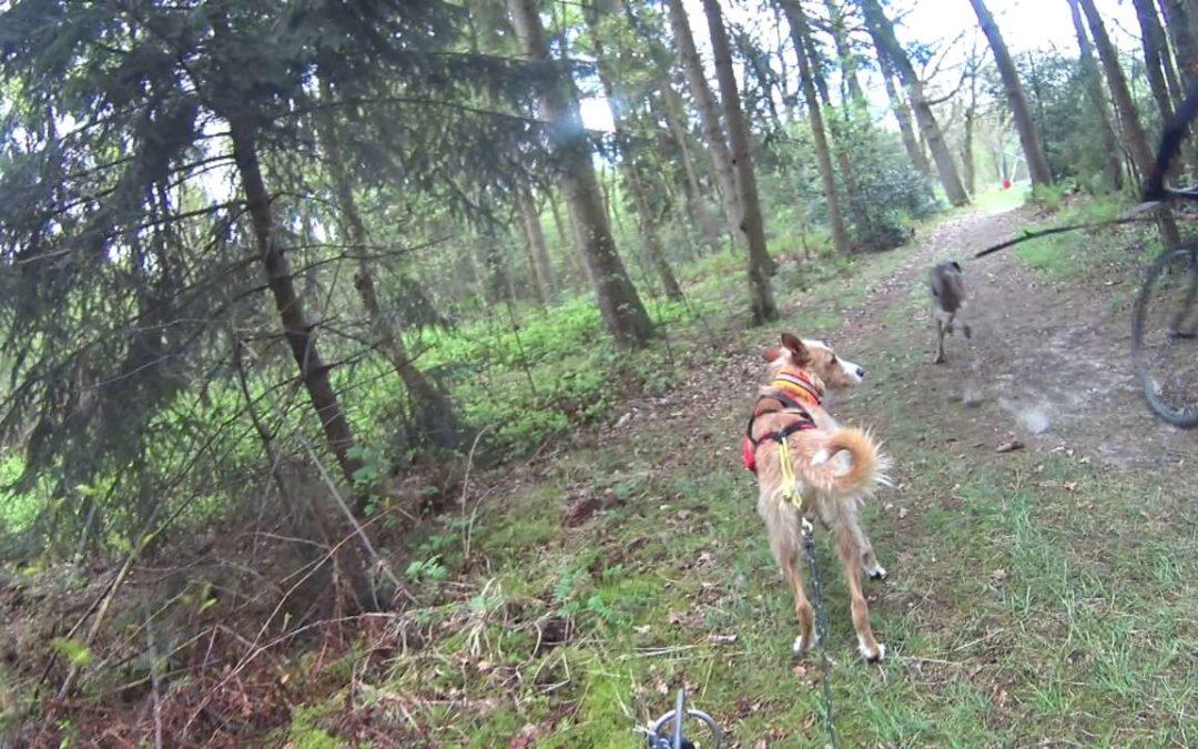 Dogscooting und Hundekontakte auf dem Trail