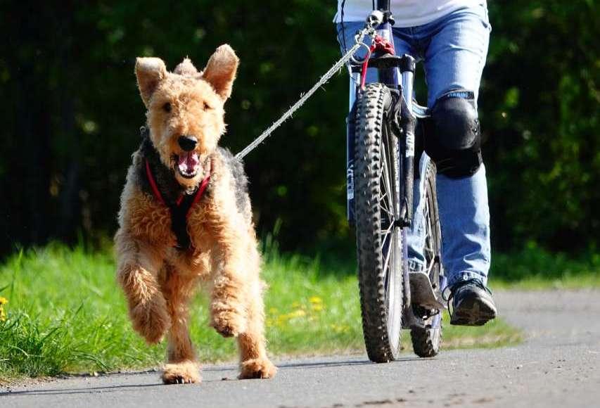Erste Schritte-Der Start im Dogscooting, Bikejöring, Canicross